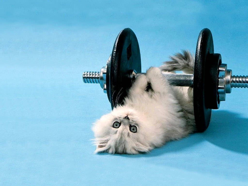 Cute exercise picture. Because cute. Image from pinterest.